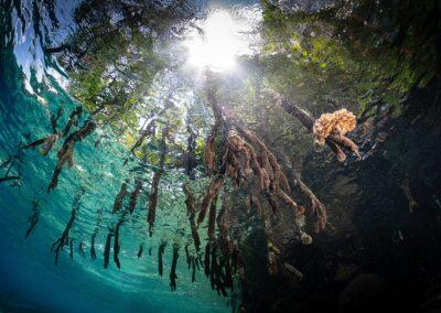 Ocean Image Bank